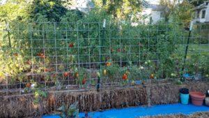 Straw bale garden work