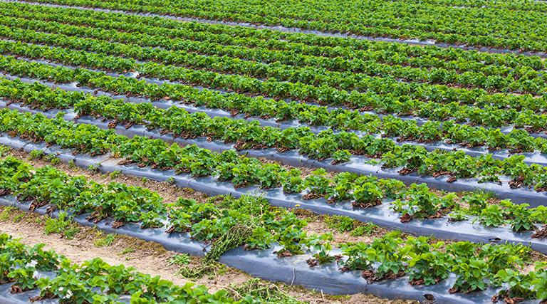 Straw Bale Garden Solution